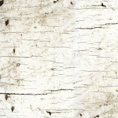 Birch wood cotton fabric from the Moose Lodge collection by Henry Glass