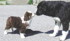 Animali: i cani distinguono le facce felici da quelle arrabbiate – Meteo Web - http://www.forumcani.com/blog/2015/02/11/animali-i-cani-distinguono-le-facce-felici-da-quelle-arrabbiate-meteo-web/