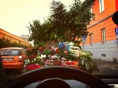 Fiori nel traffico di Roma