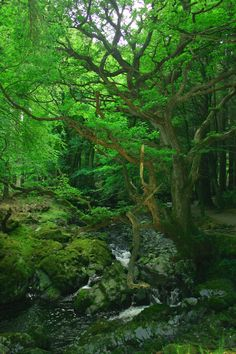 Tollymore Forest Park - Northern Ireland