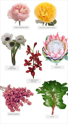 the beauty of love bouquet Types Of Flowers, Fresh Flowers, Beautiful Flowers, Wedding Bouquets, Wedding Flowers, Flower Chart, Flower Identification, Flower Food, Flower Ideas