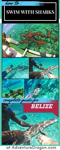 How to Swim with Sharks -- Caye Caulker Belize Top 10 <3 http://www.adventuredragon.com/adventure-destinations/swim-with-sharks-caye-caulker-belize/