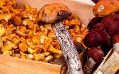 Какие питательные вещества содержатся в грибах. Чем полезны грибы для человека