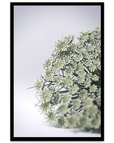 How To Dry Basil, Dandelion, Calm, Herbs, Flowers, Plants, Poster, Master Bedrooms, Nature