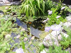 A pond has its own complete Eco-environment