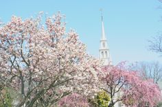 Whenever your cold this winter think of the beautiful spring season in #Newport - Queen Anne Square