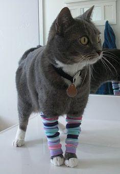 kittylegs. Like babylegs. Totally useless but so cute. :D (btw the original tutorial is an april fool's joke)