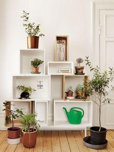 5 conseils déco pour mettre des plantes dans votre intérieur – Cocon de décoration: le blog