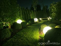 Co z tym ogródeczkiem począć - strona 1106 - Forum ogrodnicze - Ogrodowisko