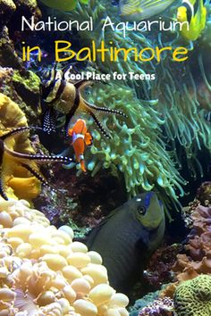National Aquarium in Baltimore - A Cool Place for Teens