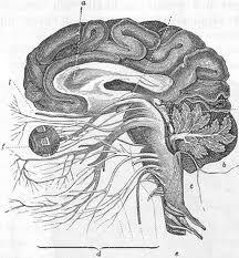 hjärnan - Sök på Google