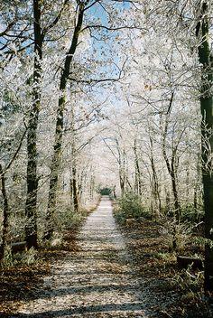 ~ Living a Beautiful Life ~ Winter path .... ..rh