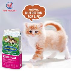 WINNER PLUS Kittencat is a highly energetic feed, enriched with proteins, ideal for kittens during every stage of their growth and suitable for females during gestation and nursing period. The tasty, easily digestible and nourishing formula of selected raw materials, such as high-quality chicken meat, guarantees healthy and balanced nutrition during growth with the best acceptance. Dog Food Online, Flora Intestinal, Plant Fibres, Meat Chickens, Cat Food, Cats And Kittens, Dog Food Recipes, Nutrition, Raw Materials