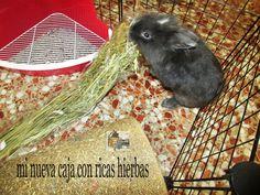 Wenas a tod@s! Por fin es viernes. El sábado tendréis en mi blog la entrada a esta caja del ratmasi no sabéis ratma es el de la foto. Llego la caja de bunniesthatlunch solo para el. #box#bunnies#rabbit#black#bunniesthatlunch#