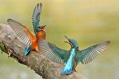 Alpine Birding China – Bird Photography in China