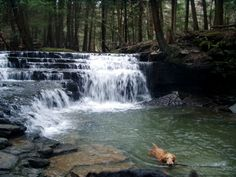 Salt Springs State Park in Northeastern Pennsylvania! Would love to go! :D