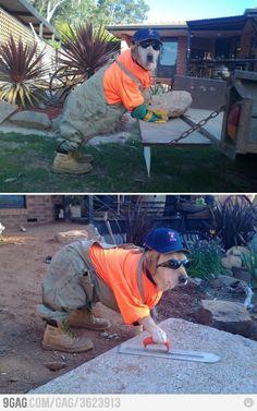 He's a hardworking dog