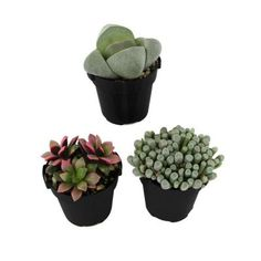 2.5 in. Mimicry Plant (3-Pack)-0881001 - The Home Depot