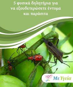 5 φυσικά δηλητήρια για να εξουδετερώσετε έντομα και παράσιτα  Τα φυσικά δηλητήρια για να εξουδετερώσετε έντομα και παράσιτα, ποικίλουν ανάλογα με το είδος. Εξαρτώνται επίσης και από το μέρος όπου ενδημεί ο ενοχλητικός. Trees To Plant, Diy And Crafts, Seeds, Health Fitness, Tips, Nature, Flowers, Plants, Gardening