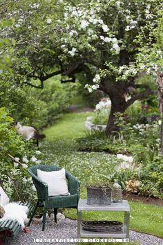 Gammalt äppelträd i blom och bekväma rustika möbler, fina rogivande färger !