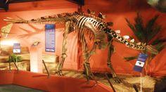 Miragaia longicollum. Dinosauria, Ornithischia, Thyreophora, Stegosauria, Stegosauridae, Dacentrurinae. Auteur : Ghedo, 2011.