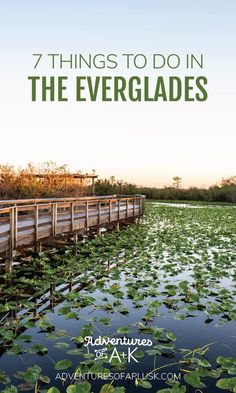We're sharing 7 things to do in the Everglades, from the best trails and activities, to where to eat near the park, and more! Cascade National Park, North Cascades National Park, Everglades National Park, Capitol Reef National Park, Biscayne National Park, Florida Travel, Travel Usa, Florida Keys, Florida National Parks