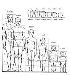 La proporzione del corpo di un bambino di un anno equivale a 4 volte la dimensione della sua testa, mentre il discorso cambia per un bambino di 3 anni in cui il corpo equivale a 5 volte la sua testa, per un bambino di 5 anni il corpo è di 6 volte la  dimensione della sua testa, fino ad arrivare all'età adulta in cui il corpo acquisisce la dimensione che corrisponde a 8 volte la sua testa