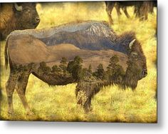 #Buffalo Sand Dunes #MetalArt #Bison #Print By James Bo  Insogna #insognaGallery