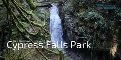Cypress Falls Park is a lesser known, yet impressive area of forest in West Vancouver. A walk through the trails of Cypress Falls Park takes you among some o. Vancouver Photos, Falls Park, Park Trails, Autumn Park, Big Tree, Photo Location, North Shore, Lighthouse, Hiking