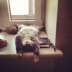 """From @julygnetova: """"ITS SMOKY. THE BEST CAT IN THE WORLD."""" #catsofinstagram #cat #cats #neko [#twitterweek! twitter.com/catsofinstagram] [source: http://instagr.am/p/OCYZg3tUox/ ]"""
