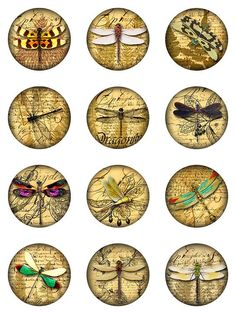 Insect coins