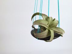 Show Off Air Plants with a Hanging Saucer >> http://blog.diynetwork.com/maderemade/how-to/show-off-an-air-plant-with-a-simple-hanging-saucer/?soc=pinterest