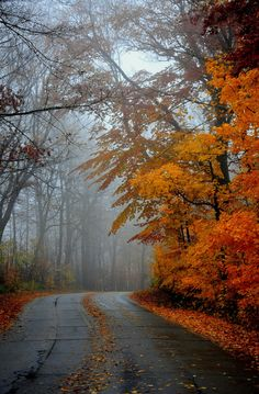 A quiet road a cool misty Fall afternoongreat for country drives looking f Schöne Naturbilder Composition Photo, Autumn Scenes, Autumn Aesthetic, Seasons Of The Year, Fall Pictures, Autumn Leaves, Autumn Rain, Autumn Cozy, Autumn Forest