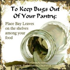 Tip of the day Keeping Bugs Out Of Your Food Pantry