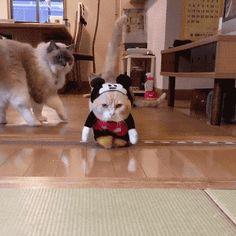 Human, we gotta talk. This is a stupid outfit.