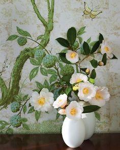 martha stewart camellias