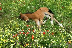 Sweet dreams--foal in flowers | <br/> Dreams
