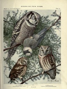 pt.2 (1914) - Birds of New York - Biodiversity Heritage Library