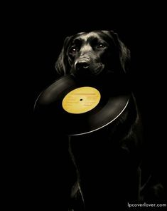 NOOOO your your the dog I'm the dj‼️ Vinyl Music, Vinyl Art, Vinyl Records, Mellow Yellow, Black N Yellow, Black And White, Black Gold, Color Black, Platine Vinyle Thorens