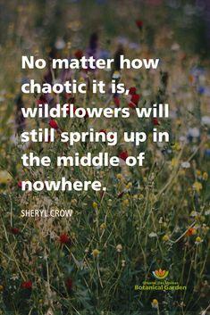 Coffee Flower, Urban Farmer, City Farm, Garden Quotes, Public Garden, Flower Quotes, Nature Quotes, Almost Always, Botanical Gardens