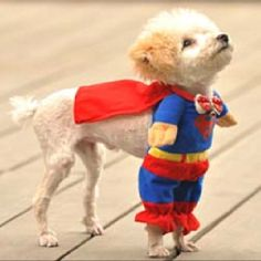 Superdogggg!