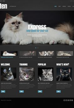 Cat Responsive WordPress Theme. Additional features, comprehensive documentation and stock photos are included.