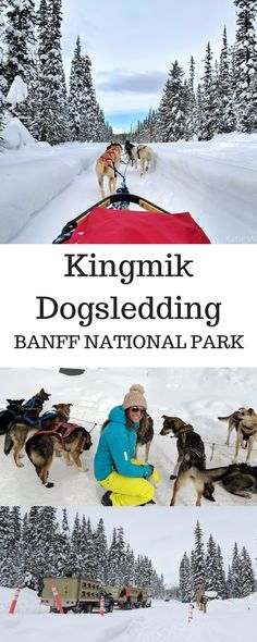 My review and everything you need to know about Kingmik Dogsledding Tours