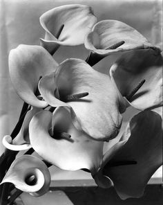 Black And White Photography Nature Flowers Ansel Adams 57 Ideas Edward Weston, Alfred Stieglitz, Black And White Portraits, Black And White Photography, Monochrome Photography, History Of Photography, Nature Photography, Photography Quote, Flower Photography