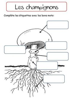 LES CHAMPIGNONS - La classe de Corinne Primary Science, Science Art, Science For Kids, Art For Kids, Activities For Kids, Fungi, Environmental Studies, Science Worksheets, Forest School