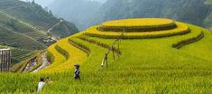 Mu Cang Chai - Mam Xoi (Raspberry Hill) North Vietnam, Rice Terraces, Bus Tickets, Bus Travel, Historical Monuments, Places Of Interest, Best Sites, Summer Months, Chai