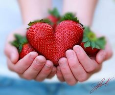 Valentines made with strawberry hearts? I Love Heart, With All My Heart, Happy Heart, Love Is All, Grateful Heart, Strawberry Hearts, Strawberry Fields, Strawberry Shortcake, Giant Strawberry