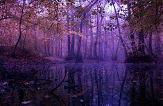 forest purple enchanted magical landscape pretty nature magic dark fantasy landscapes scenery pink evening lori rocks places