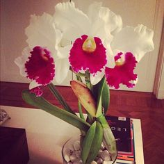 Gotta love this!!  #orchid #flowers
