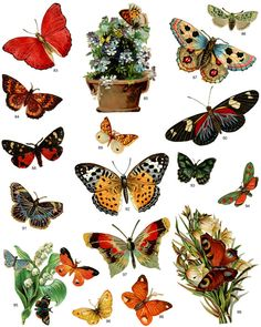 full page of royalty free butterfly clip art